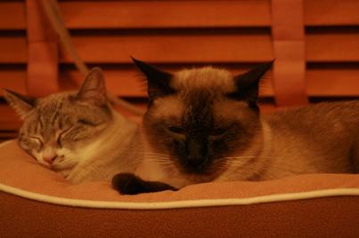イグ&バーディ