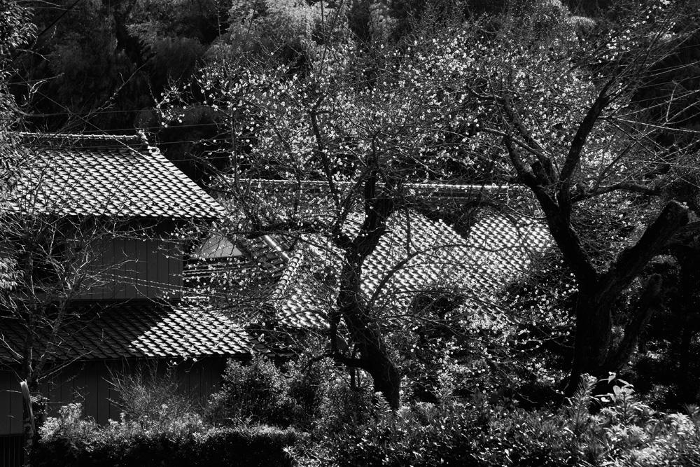 松虫寺4-36