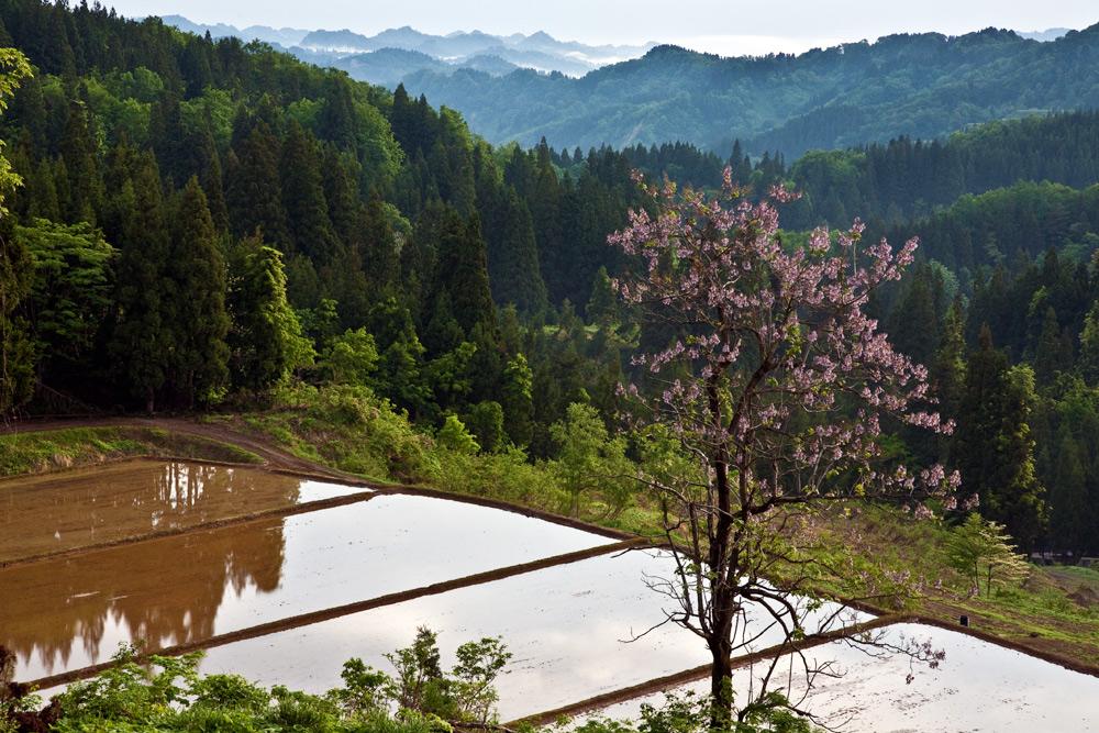 matsunoyama02.jpg