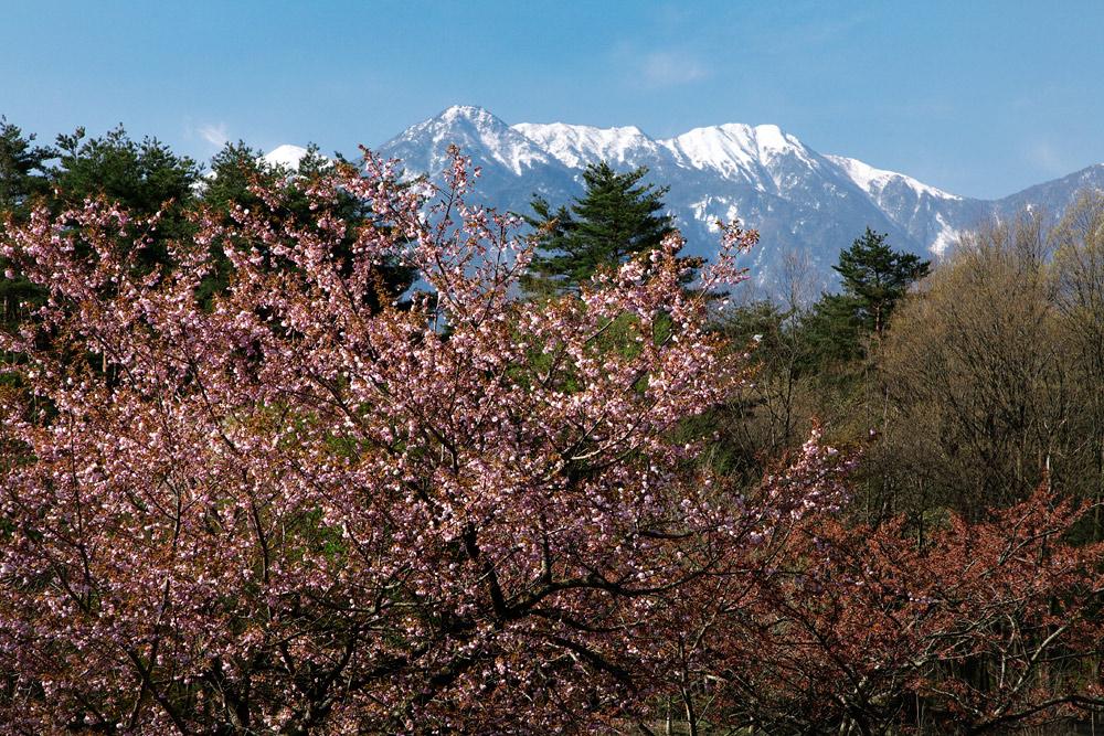 ojiragawa02_20100502202859.jpg