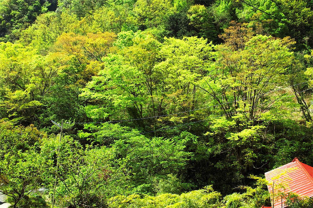 ojiragawa05.jpg