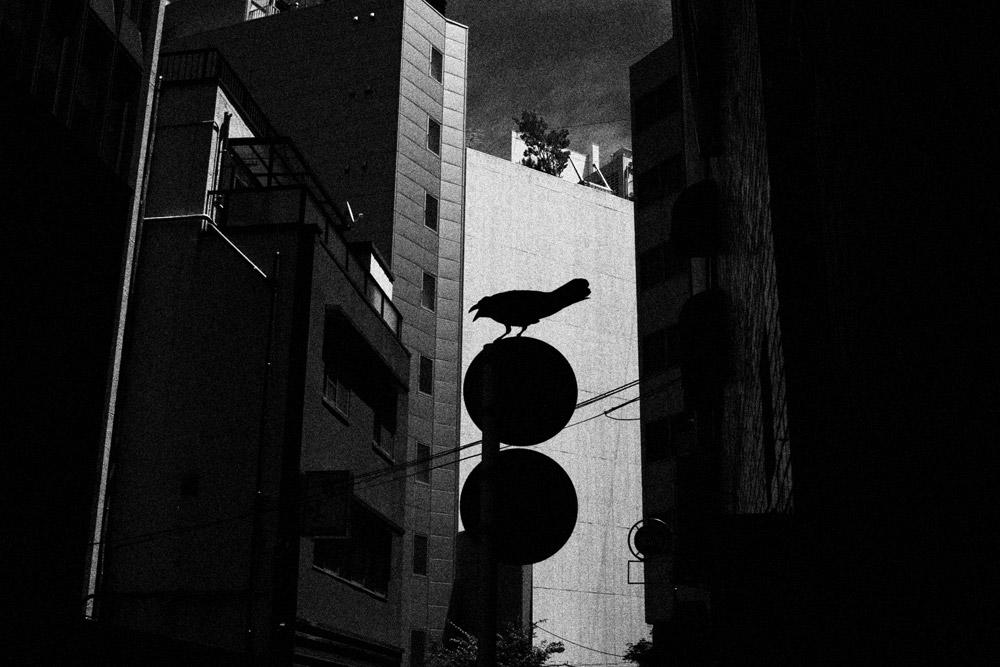 shibuya5-05.jpg
