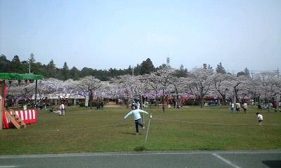 100406桜祭全体
