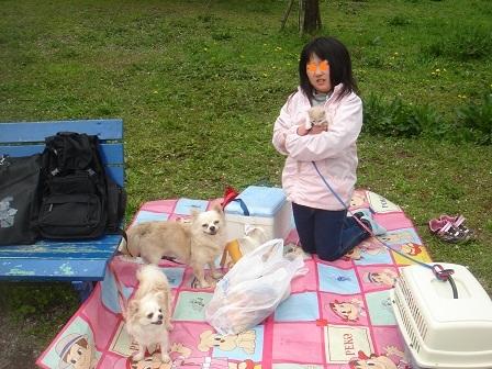 DSC02213智光山シート実織と3匹○