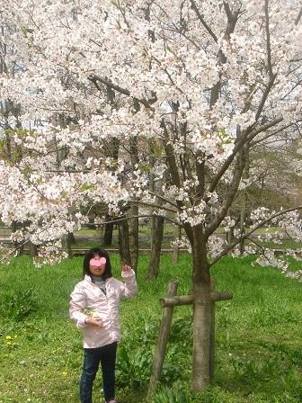 DSC02242智光山桜の木の下の実織○