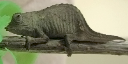 エルフィンの尻尾