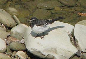 養老渓谷で見た鳥