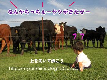 CIMG4046_20100911164050.jpg