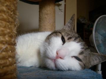 寝るマニー