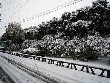 2010-1-14-1.jpg