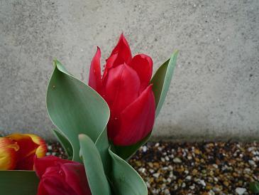 2010-3-5-1.jpg