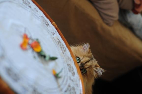 琥珀とテーブルの上の花弁