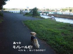 20090727-5.jpg