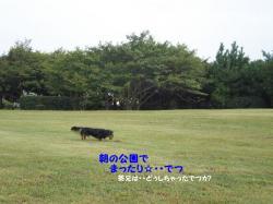 20090814-6.jpg