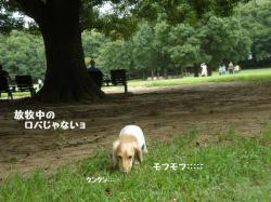 20090815-6.jpg