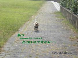 20090927-9.jpg