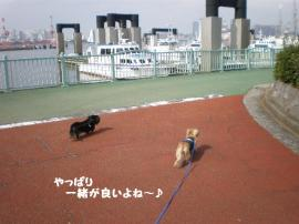 20090929-10.jpg