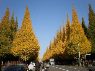 神宮銀杏並木