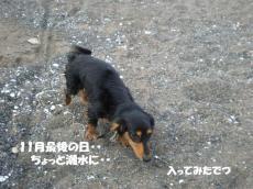 20091130-0.jpg