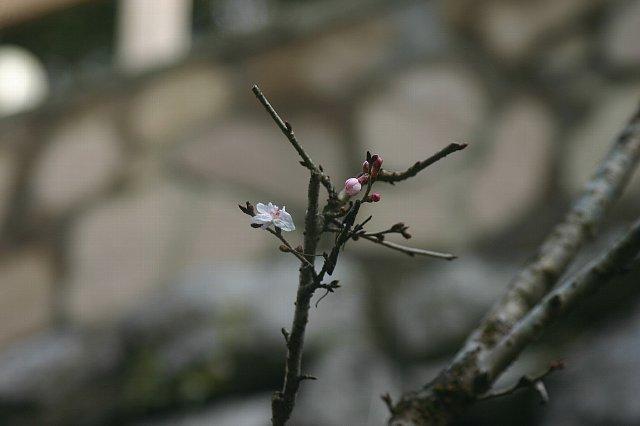 名栗の杜ー春 011