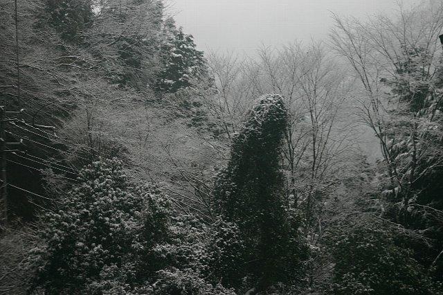 雪景色と店内の花 004