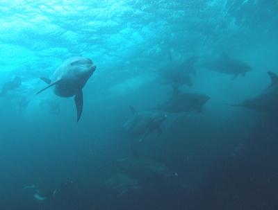 イルカ!御蔵島への小さな旅