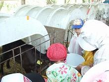 090918子牛と子ども達