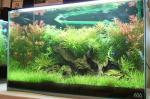 フェアレイアウト水槽1