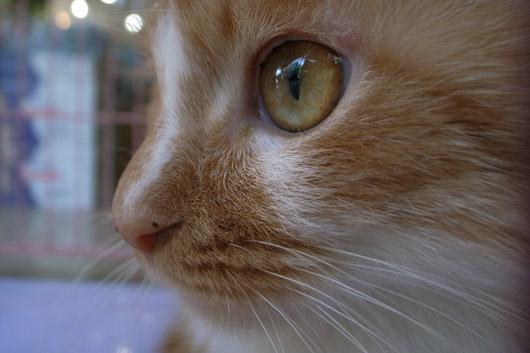 コンビニ猫ちゃん2