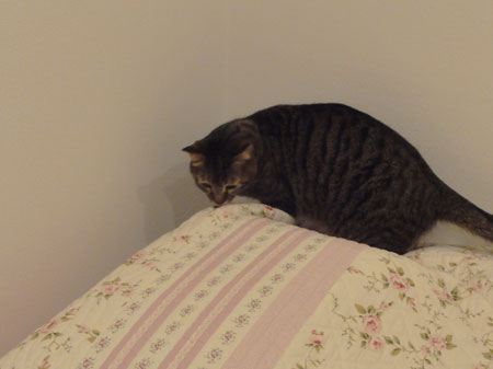 僕の寝床4