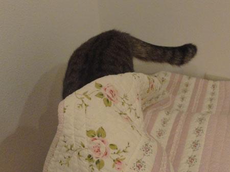 僕の寝床5