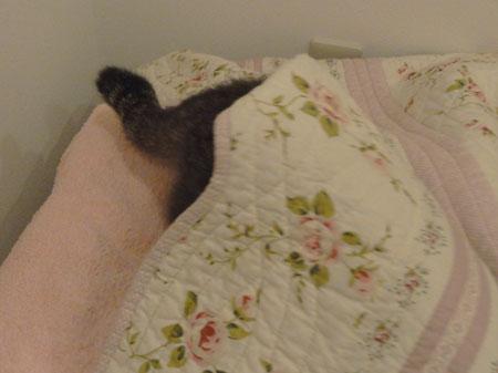 僕の寝床6
