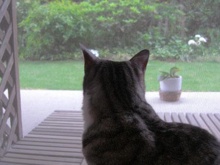 朝の窓辺6