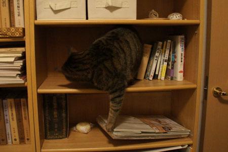 本棚のマロン2