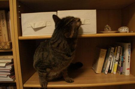 本棚のマロン4