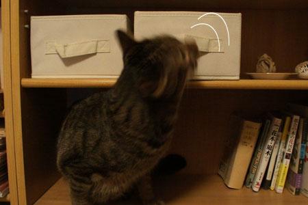 本棚のマロン6