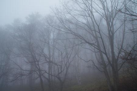 朝靄・小雨1