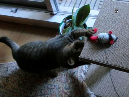 ネズミのおもちゃ3