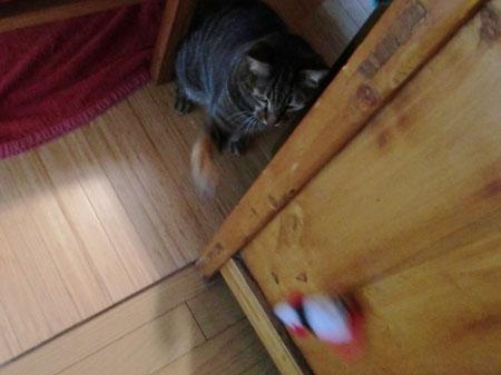 ネズミのおもちゃ5