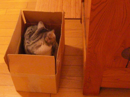 ナナの好きな段ボール箱1