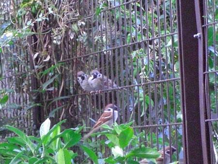 ナナと小鳥さんたち1