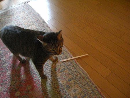 マロンと割り箸1