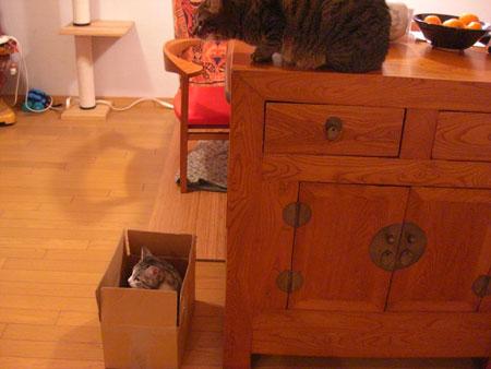 ナナの好きな段ボール箱2