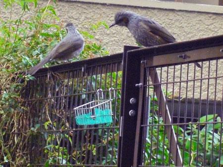 ナナと小鳥さんたち3