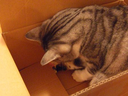 ナナの好きな段ボール箱7