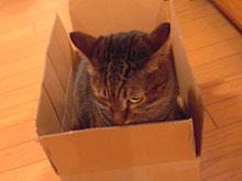 ナナの好きな段ボール箱10