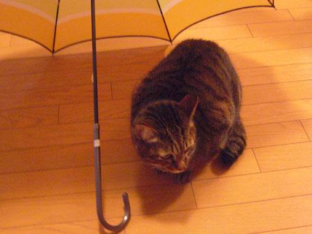 マロンと傘3