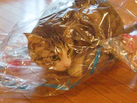 ナナとクリーニング袋2