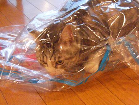 ナナとクリーニング袋3