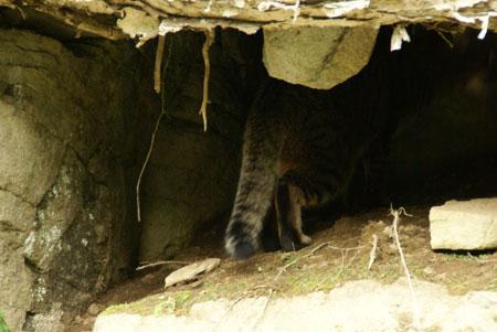 僕の洞窟4